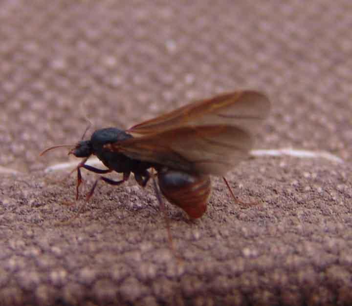 Ants - photo#8